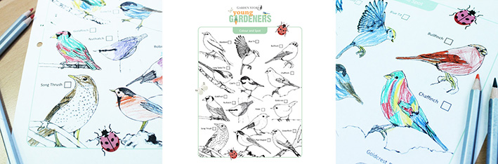Bird Spotting Colouring Page Young Gardeners
